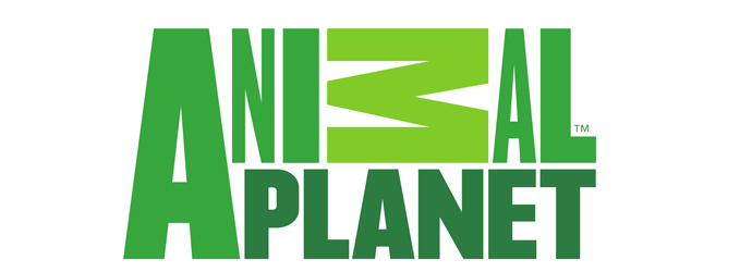 What Channel is Animal Planet on Dish Network?